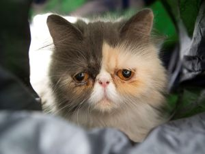 PAY-Pixie-the-sad-cat-from-Bristol