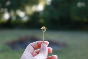 flowers-1428760_1280