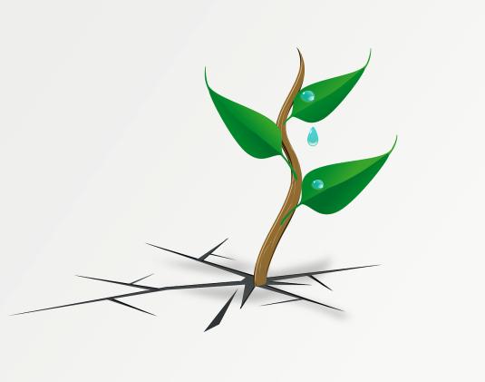 plant-148601_1280